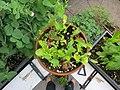 Balcony garden (9069549775).jpg