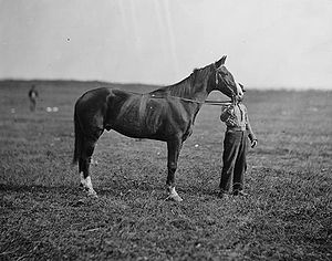 George Meade - General Meade's horse, Old Baldy