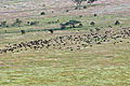 Balloon Safari 2012 06 01 3123 (7522680540).jpg