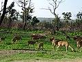 Bandipur Tiger Reserve, Karnataka DSC00710.JPG