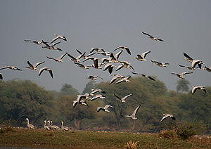 Chambal River - Keoladeo National Park is supplied with water from Chambal river irrigation project