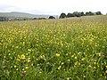 Barn and Hay Meadow - geograph.org.uk - 21704.jpg
