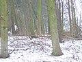 Baro Wood. - geograph.org.uk - 136114.jpg