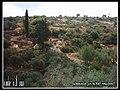 Beautiful Nature in Palestine الطبيعه الخلابه في فلسطين اليامون - panoramio.jpg
