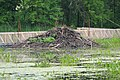 Beaver lodge PP.jpg