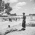Bedoeïenen, met hun lastdieren vanuit de Negevwoestijn op weg naar de weekmarkt , Bestanddeelnr 255-0769.jpg