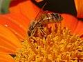 Bee-11.jpg