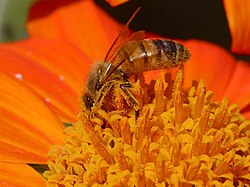 meaning of beekeeping