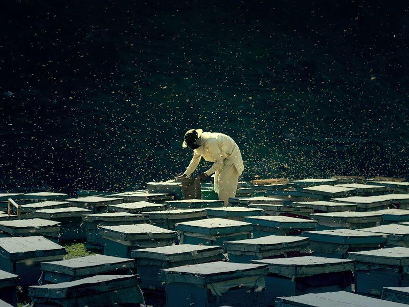 File:Bee Farm.jpg