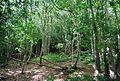 Beech Wood, Groombridge - geograph.org.uk - 1493310.jpg