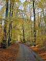 Beech woods near Hook End - geograph.org.uk - 989471.jpg