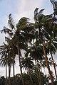 Bentota Beachside - panoramio (5).jpg