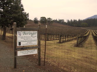 Red Hills Lake County AVA - Beringer vineyard in Kelseyville, within the Red Hills area.