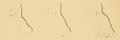 Bertillon - Identification anthropométrique (1893) 060.2.png