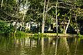 Bioma do Parque Municipal de Marapendi - RJ.jpg