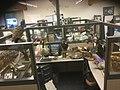 Bird Specimens in Temporary Storage.jpg