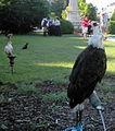 Birds15Slovakia2.JPG