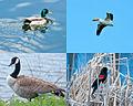 Birds at Walden Ponds.jpg