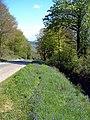 Bluebells - geograph.org.uk - 735714.jpg