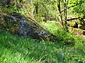Bluebells and rock in private garden - May 2012 - panoramio.jpg