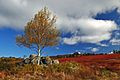 Blueberry fields at Parrsboro.jpg