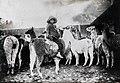 Bolivian llama herder ca 1909.jpg