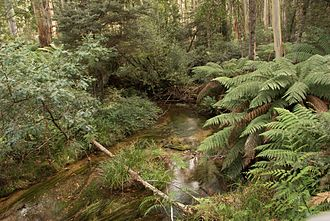 Shire of East Gippsland - Bonang River, East Gippsland.