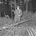 Bosbewerking, arbeiders, boomstammen, gereedschappen, beilen, Bestanddeelnr 251-9143.jpg