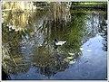 Botanischer Garten Freiburg - Botany Photography - panoramio (17).jpg