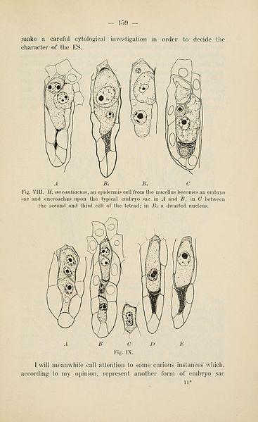 File:Botanisk tidsskrift (Page 159) BHL5149094.jpg