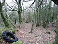 Bowdanoddon Wood - geograph.org.uk - 742760.jpg