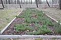 Brāļu kapi WWI, Tēraudi, Salaspils pagasts, Salaspils novads, Latvia - panoramio (2).jpg