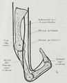 Braus 1921 221b.png
