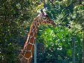 Brevard Zoo African Animals - Flickr - Rusty Clark (17).jpg