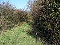 Bridleway near Ashton Common - geograph.org.uk - 1585989.jpg