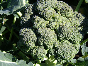 New Broccoli 'Beneforte' Is Anti-Aging Superfood, Prevents Heart Disease, Diabetes, Obesity