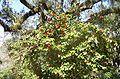 Brookgreen Gardens38.jpg