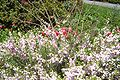 Brookgreen Gardens48.jpg