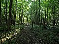 Broom Royd Wood - geograph.org.uk - 995312.jpg