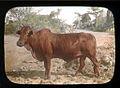 Bull (2).jpg