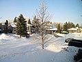 Buried Linden Tree (8638527999).jpg