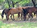 Butcher Jones Road, Tonto National Forest, Fort McDowell, AZ 85264, USA - panoramio (10).jpg