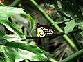 Butterfly (498139658).jpg