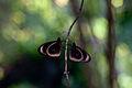 Butterfly Duet (Imagicity 929).jpg