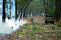 CSIRO ScienceImage 345 The Effect of Fire on the Area.jpg