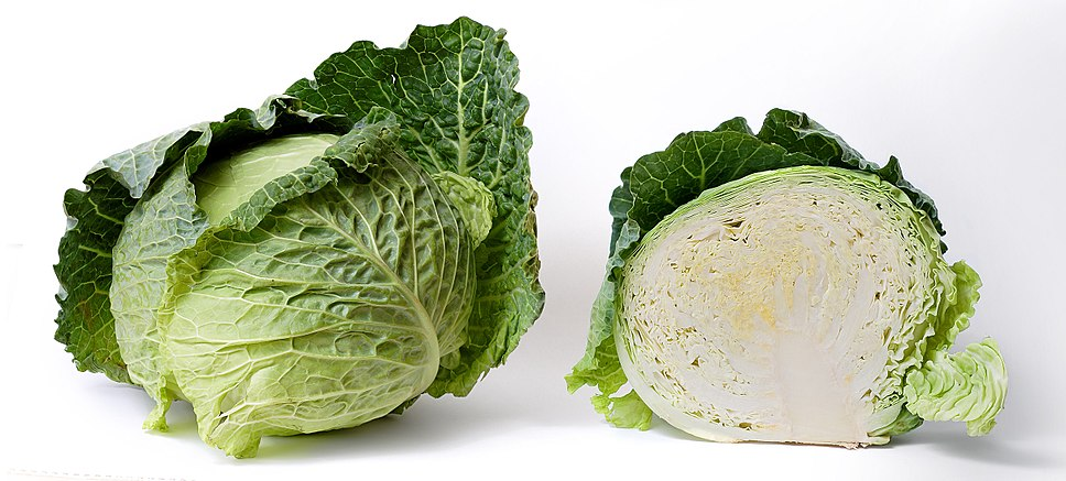 A white cabbage, whole and in longitudinal section