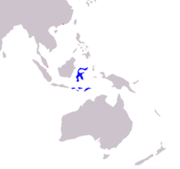 Sulawesi and the Lesser Sunda Islands. Introduced to Singapore and Hong Kong