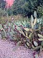 Cacti, Porto Botanical gardens..jpg