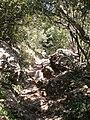 Camí entre la Cova de l'Arcada i Pas del Príncep Cova de l'Arcada, Montserrat (abril 2011) - panoramio.jpg