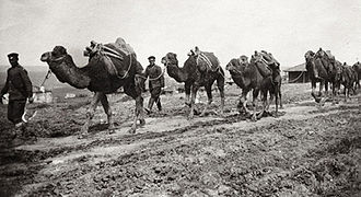 Bulgarian Armed Forces - A camel caravan of the Bulgarian 17th Regiment carrying supplies for the Çatalca operation, 1912